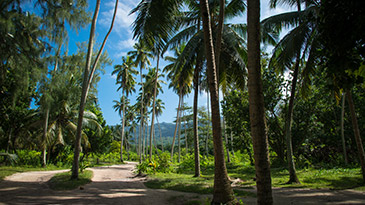 The flora and fauna of the Seychelles