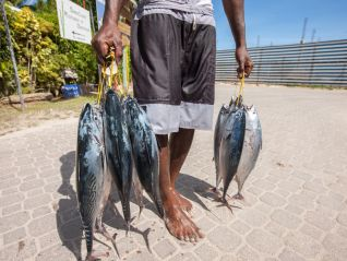 fishing-tour-full-day-fishing-around-praslin-img-490