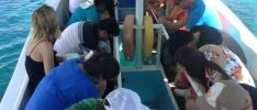 Exkursionen: Best-Tours Seychelles -  Glasbodenboot-Tour - St Anne Marine Park