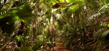 tour-private-guided-tour-la-source-des-seychelles-vallee-de-mai-private-guided-tour-3