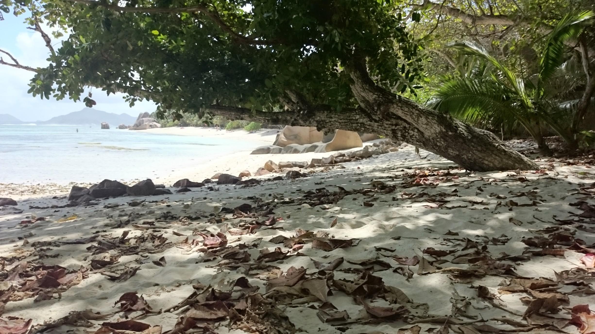 geburtstag im paradies seychellen reisebericht von klaus. Black Bedroom Furniture Sets. Home Design Ideas